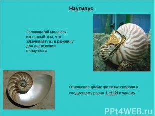 НаутилусГоловоногий моллюск известный тем, что закачивает газ в раковину для дос