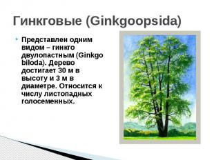 Гинкговые (Ginkgoopsida)Представлен одним видом – гинкго двулопастным (Ginkgo bi