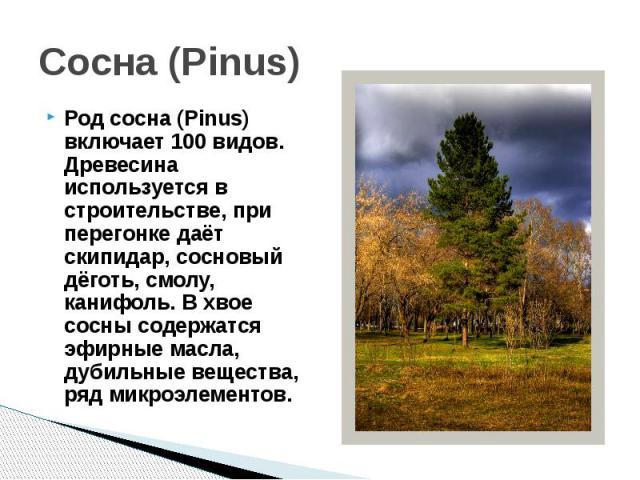 Сосна (Pinus)Род сосна (Pinus) включает 100 видов. Древесина используется в строительстве, при перегонке даёт скипидар, сосновый дёготь, смолу, канифоль. В хвое сосны содержатся эфирные масла, дубильные вещества, ряд микроэлементов.