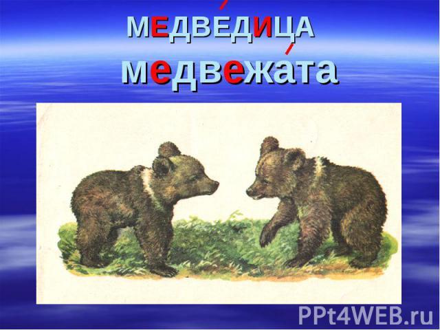 МЕДВЕДИЦА медвежата