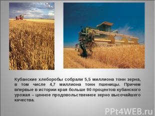 Кубанские хлеборобы собрали 5,5 миллиона тонн зерна, в том числе 4,7 миллиона то