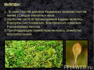ВЫВОДЫ:. В окрестностях деревни Карманово произрастают не менее 11 видов эпилитн