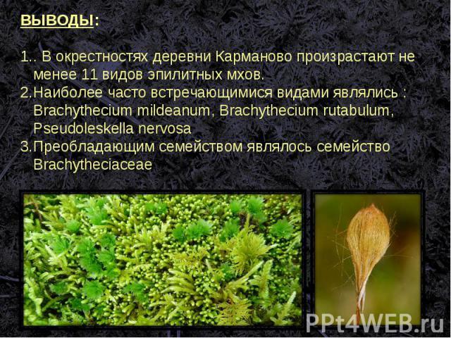 ВЫВОДЫ:. В окрестностях деревни Карманово произрастают не менее 11 видов эпилитных мхов.Наиболее часто встречающимися видами являлись : Brachythecium mildeanum, Brachythecium rutabulum, Pseudoleskella nervosa Преобладающим семейством являлось семейс…