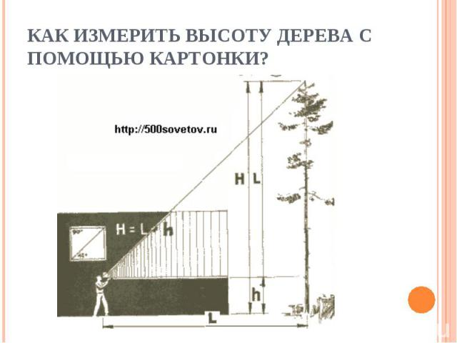 Как измерить высоту дерева с помощью картонки?