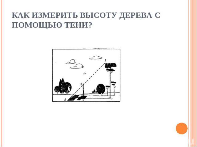 Как измерить высоту дерева с помощью тени?