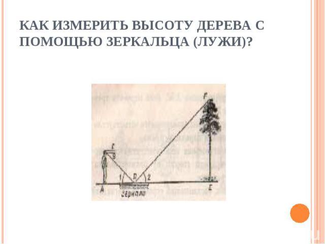 Как измерить высоту дерева с помощью зеркальца (лужи)?