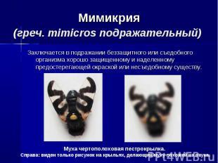 Мимикрия(греч. mimicros подражательный) Заключается в подражании беззащитного ил