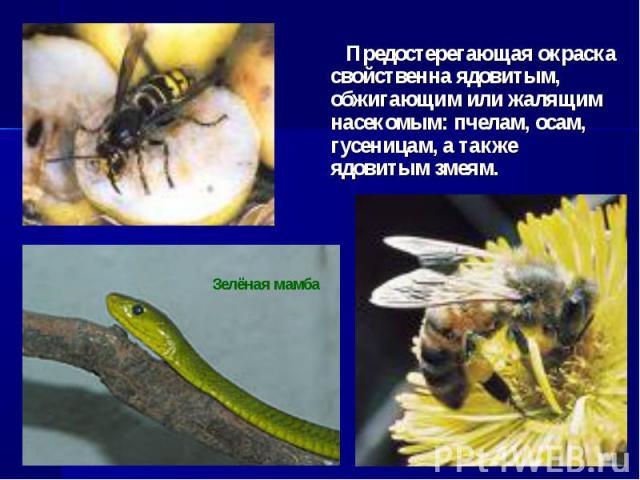 Предостерегающая окраска свойственна ядовитым, обжигающим или жалящим насекомым: пчелам, осам, гусеницам, а также ядовитым змеям.