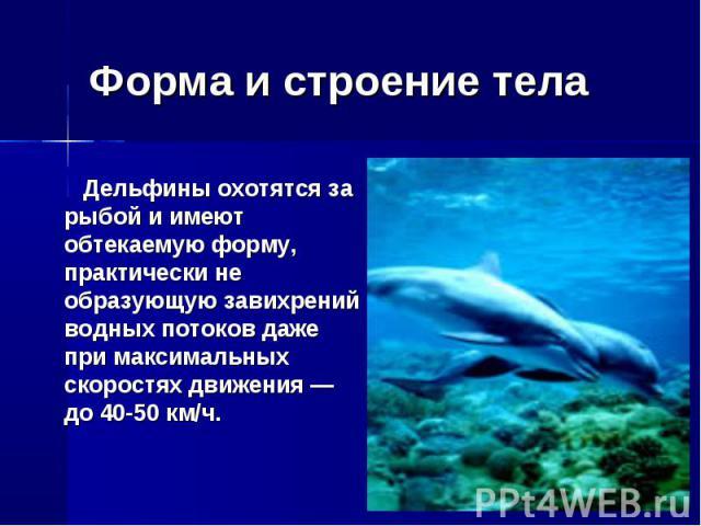 Форма и строение тела Дельфины охотятся за рыбой и имеют обтекаемую форму, практически не образующую завихрений водных потоков даже при максимальных скоростях движения — до 40-50 км/ч.
