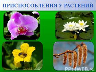 Приспособления у растений
