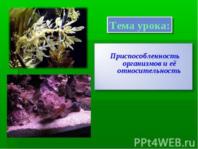 Тема урока:Приспособленность организмов и её относительность.