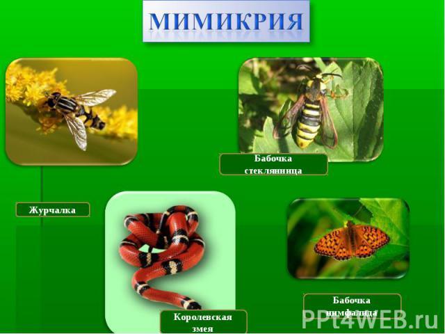 Мимикрия