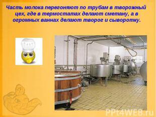 Часть молока перегоняют по трубам в творожный цех, где в термостатах делают смет