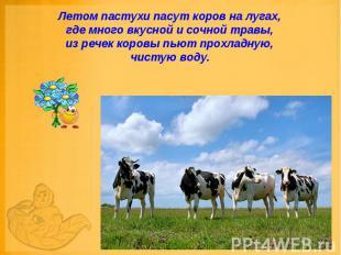 Летом пастухи пасут коров на лугах, где много вкусной и сочной травы, из речек к
