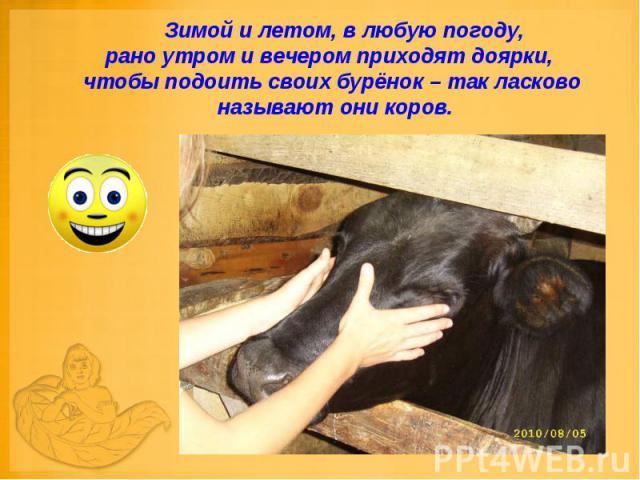 Зимой и летом, в любую погоду, рано утром и вечером приходят доярки, чтобы подоить своих бурёнок – так ласково называют они коров.