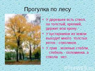 Прогулка по лесуУ деревьев есть ствол, он толстый, крепкий, держит всю крону.У к
