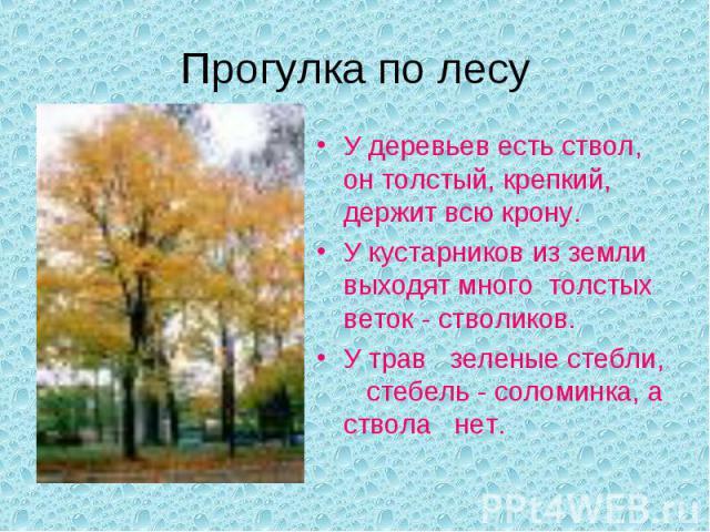Прогулка по лесуУ деревьев есть ствол, он толстый, крепкий, держит всю крону.У кустарников из земли выходят много толстых веток - стволиков.У трав зеленые стебли, стебель - соломинка, а ствола нет.