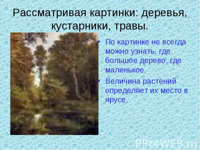 Рассматривая картинки: деревья, кустарники, травы.По картинке не всегда можно узнать, где большое дерево, где маленькое.Величина растений определяет их место в ярусе.