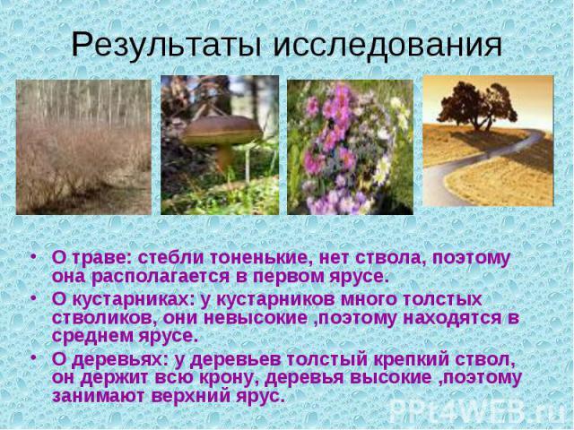 Результаты исследованияО траве: стебли тоненькие, нет ствола, поэтому она располагается в первом ярусе.О кустарниках: у кустарников много толстых стволиков, они невысокие ,поэтому находятся в среднем ярусе.О деревьях: у деревьев толстый крепкий ство…