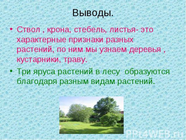 Выводы.Ствол , крона, стебель, листья- это характерные признаки разных растений, по ним мы узнаем деревья , кустарники, траву.Три яруса растений в лесу образуются благодаря разным видам растений.