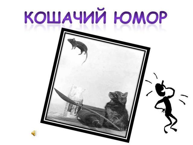 Кошачий юмор