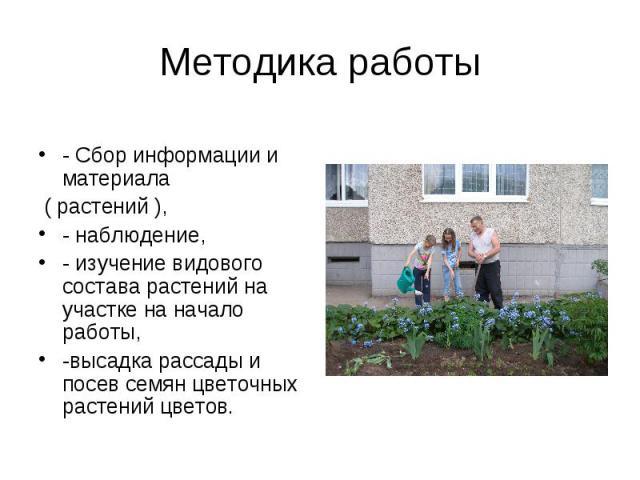 Методика работы- Сбор информации и материала ( растений ), - наблюдение,- изучение видового состава растений на участке на начало работы, -высадка рассады и посев семян цветочных растений цветов.