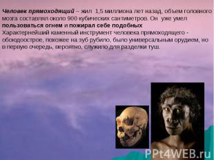 Человек прямоходящий – жил 1,5 миллиона лет назад, объем головного мозга составл
