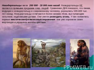 Неандертальцы жили 200 000 - 28 000 лет назад. Неандертальцы НЕ являются прямыми