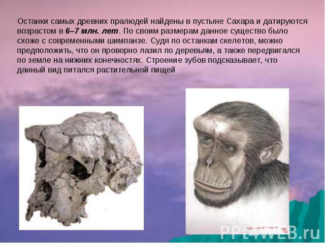 Останки самых древних пралюдей найдены в пустыне Сахара и датируются возрастом в 6–7 млн. лет. По своим размерам данное существо было схоже с современными шимпанзе. Судя по останкам скелетов, можно предположить, что он проворно лазил по деревьям, а …