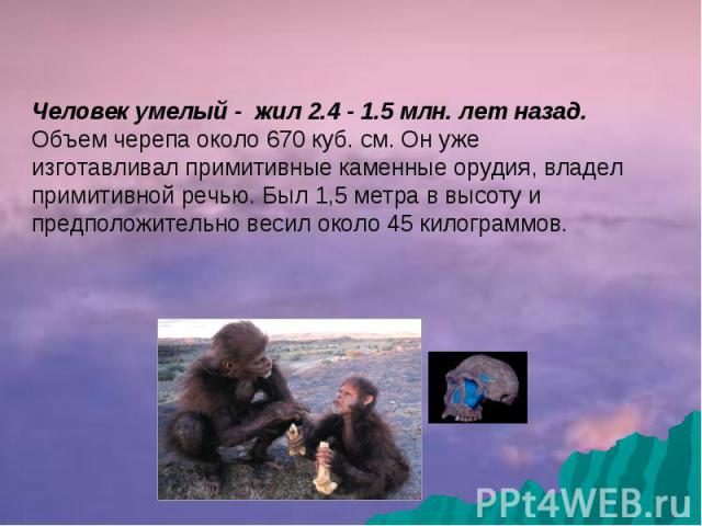 Человек умелый - жил 2.4 - 1.5 млн. лет назад. Объем черепа около 670 куб. см. Он уже изготавливал примитивные каменные орудия, владел примитивной речью. Был 1,5 метра в высоту и предположительно весил около 45 килограммов.