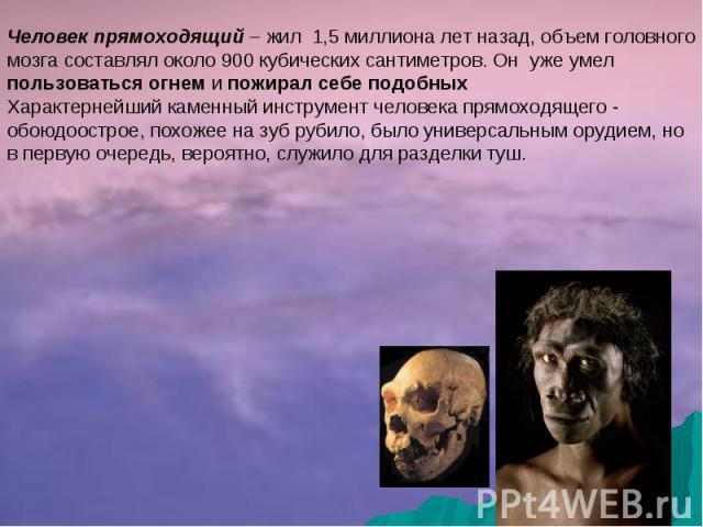 Человек прямоходящий – жил 1,5 миллиона лет назад, объем головного мозга составлял около 900 кубических сантиметров. Он уже умел пользоваться огнем и пожирал себе подобныхХарактернейший каменный инструмент человека прямоходящего - обоюдоострое, похо…