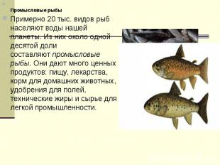 Промысловые рыбыПримерно 20 тыс. видов рыб населяют воды нашей планеты. Из них о