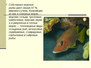 Собственноморские рыбыдают свыше 87 % мирового улова. Важнейшие из них в север
