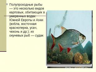 Полупроходные рыбы — это несколько видов карповых, обитающих в умеренных водах Ю