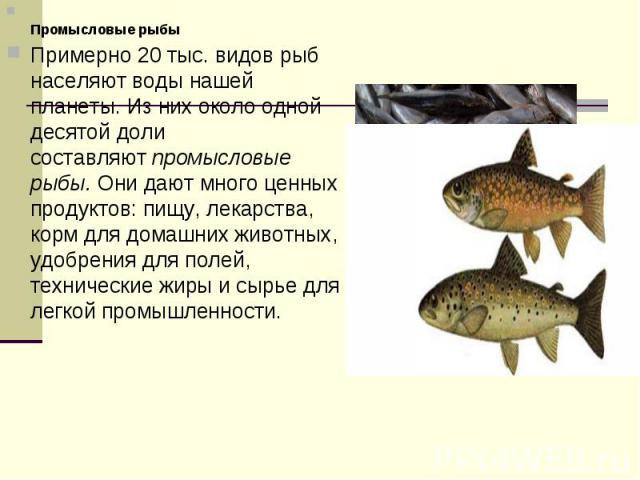 Промысловые рыбыПримерно 20 тыс. видов рыб населяют воды нашей планеты. Из них около одной десятой доли составляютпромысловые рыбы.Они дают много ценных продуктов: пищу, лекарства, корм для домашних животных, удобрения для полей, технические жиры …