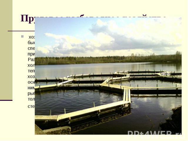 Прудовое рыбоводное хозяйство,хозяйство, разводящее быстро растущие виды рыб в специально построенных или приспособленных прудах. Различают тепловодные и холодноводные П. р. х. В тепловодном прудовом хозяйстве выращивают в основномкарпаи совместн…