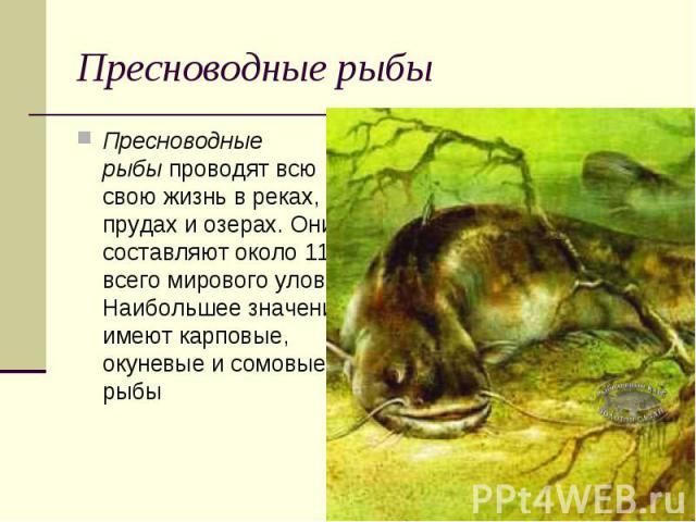 Пресноводные рыбыПресноводные рыбыпроводят всю свою жизнь в реках, прудах и озерах. Они составляют около 11% всего мирового улова. Наибольшее значение имеют карповые, окуневые и сомовые рыбы
