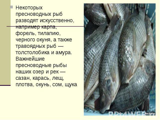 Некоторых пресноводных рыб разводят искусственно, например карпа, форель, тилапию, черного окуня, а также травоядных рыб — толстолобика и амура. Важнейшие пресноводные рыбы наших озер и рек — сазан, карась, лещ, плотва, окунь, сом, щука