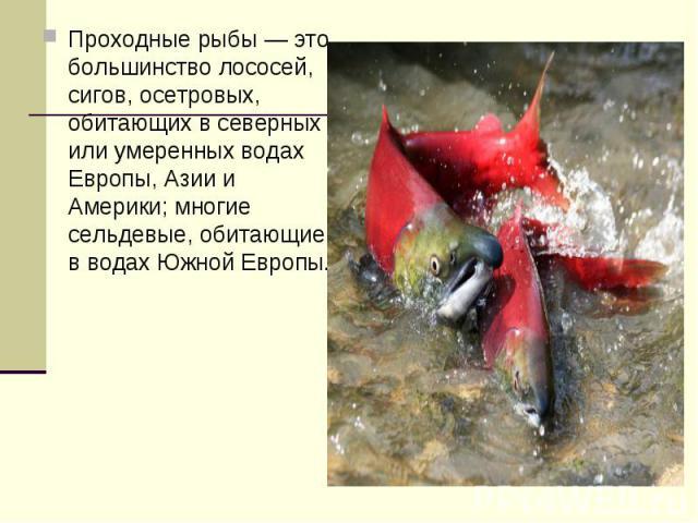 Проходные рыбы — это большинство лососей, сигов, осетровых, обитающих в северных или умеренных водах Европы, Азии и Америки; многие сельдевые, обитающие в водах Южной Европы.