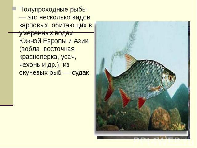 Полупроходные рыбы — это несколько видов карповых, обитающих в умеренных водах Южной Европы и Азии (вобла, восточная красноперка, усач, чехонь и др.); из окуневых рыб — судак