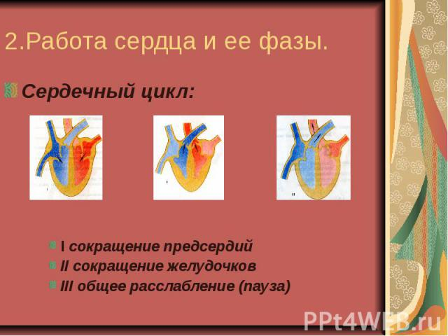 2.Работа сердца и ее фазы.Сердечный цикл:I сокращение предсердийII сокращение желудочковIII общее расслабление (пауза)