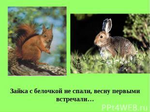 Зайка с белочкой не спали, весну первыми встречали…
