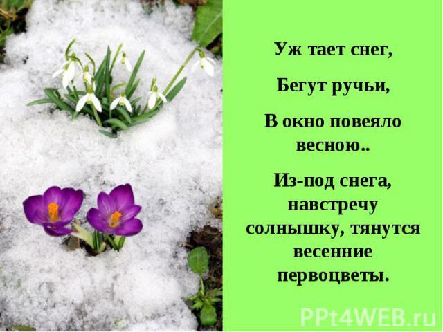 Уж тает снег,Бегут ручьи,В окно повеяло весною..Из-под снега, навстречу солнышку, тянутся весенние первоцветы.