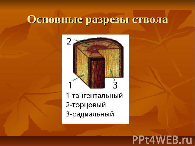 Основные разрезы ствола