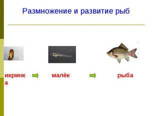 Размножение и развитие рыб