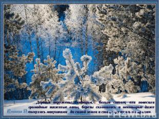 Деревья окружены сияющим, белым снегом, ели повесили громадные тяжелые лапы, бер