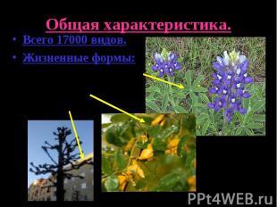 Общая характеристика.Всего 17000 видов.Жизненные формы:Травянистые растения.Куст