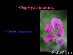 Формула цветка.Цветок похож на сидящего мотылька.Формула цветка:Ч(5)Л1+2+(2)Т(9)