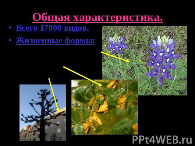 Общая характеристика.Всего 17000 видов.Жизненные формы:Травянистые растения.Кустарники.Деревья.