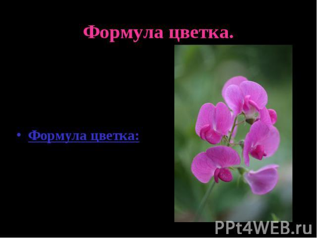 Формула цветка.Цветок похож на сидящего мотылька.Формула цветка:Ч(5)Л1+2+(2)Т(9)+1П1.